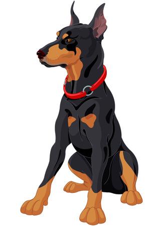 fully: Illustration of fully concentrated guard dog Doberman Illustration
