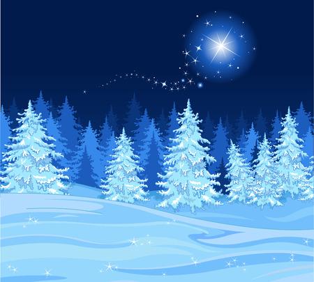 sapin: Chutes de neige sur une for�t de sapins