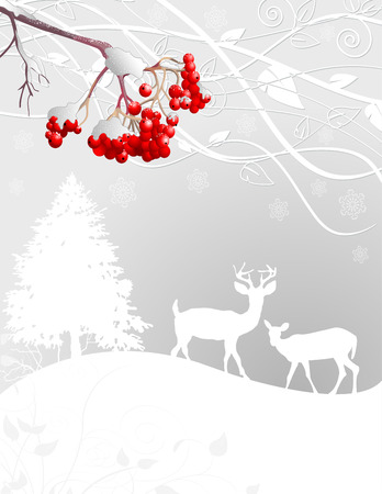 winter forest: Beautiful Winter forest scene background