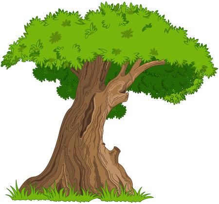arbol alamo: Ilustraci�n de muy viejo roble