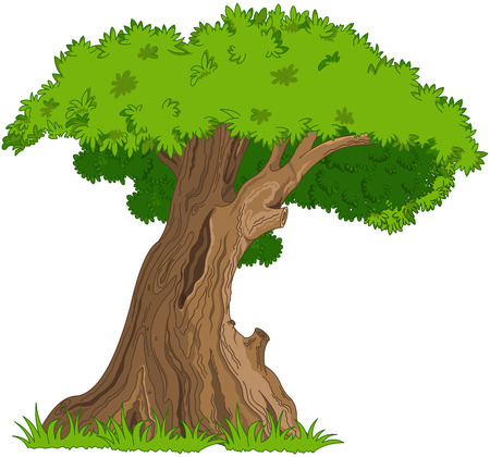Illustration of very old oak