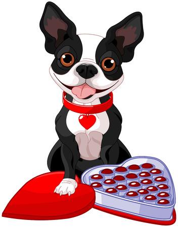 Illustration of Valentine day Boston terrier