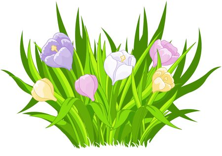 Illustration of beautiful crocus bouquet