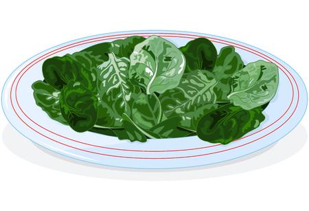 espinaca: Ilustración de la placa de espinacas