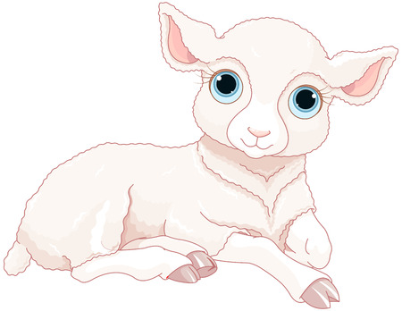 baby lamb: Illustration of cute baby sheep Illustration