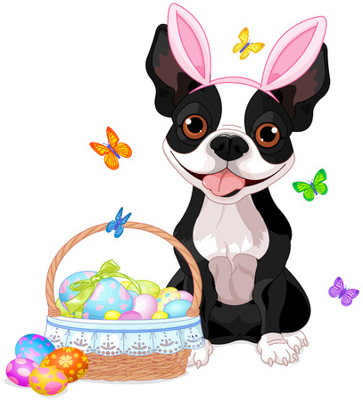 boston terrier: Cute Boston terrier near basket full of eggs