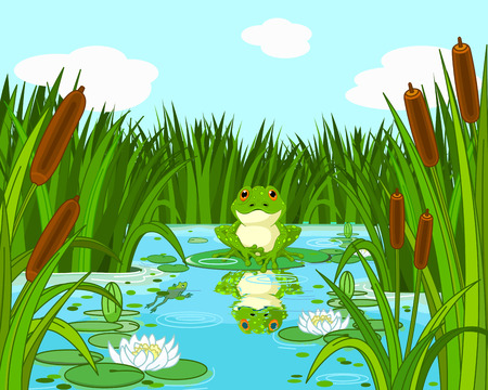 frog green: Illustration of a pond scene with frog sits on the lily
