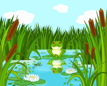 sapo: Ilustraci�n de una escena estanque con rana se sienta en el lirio Vectores