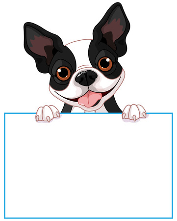 holds: Cute Boston terrier holds a sign Illustration
