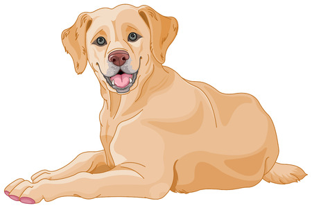 laying: Illustration of cute Labrador