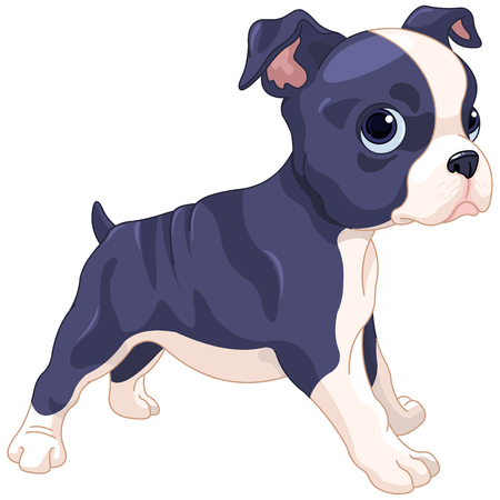 boston terrier: Illustration of cute Boston Terrier cub