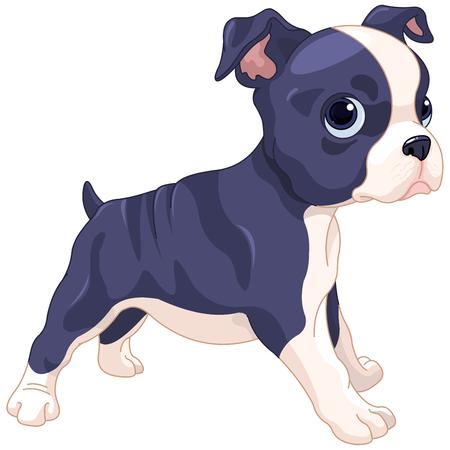 soledad: Ilustración de lindo cachorro de Boston Terrier