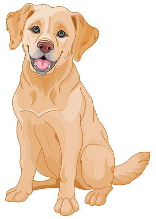 Illustration de chien mignon Golden Retriever Banque d'images - 46230245
