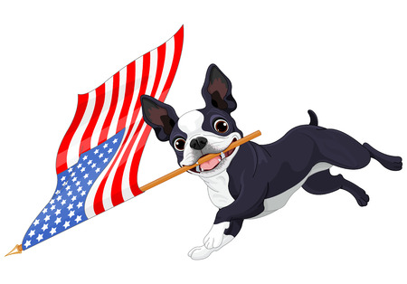 boston terrier: Illustration of cute Boston terrier celebrating 4th of July