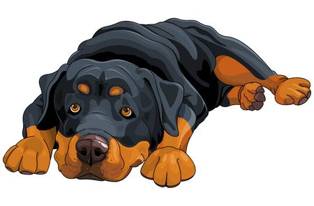 Illustratie van mooie Rottweiler Stock Illustratie