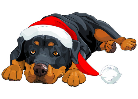 hat santa: Illustration of beautiful Christmas Rottweiler Illustration