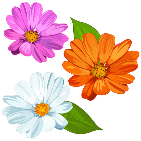 Illustration of several daisies
