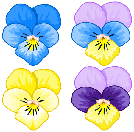 pansies: Illustration of several pansies
