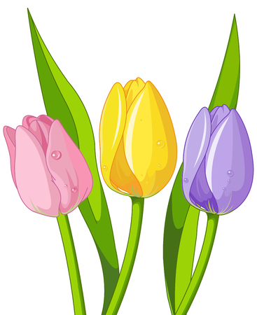 Illustration of bouquet tulips
