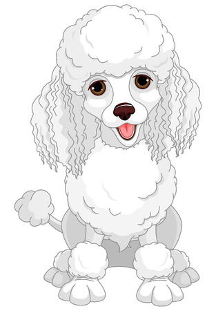 chic: Illustration of chic poodle