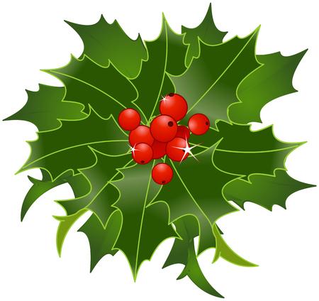 artwork: Illustration of Christmas Holly berry