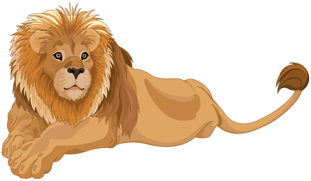 Illustration of gorgeous lion