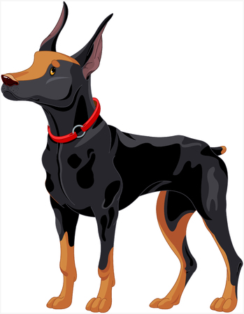 Illustration of fully concentrated guard dog Doberman Иллюстрация