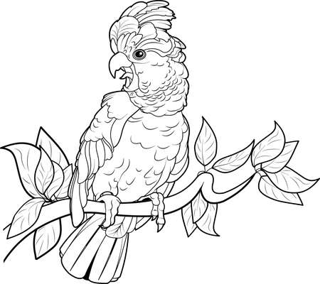 Black and white illustration of cockatoo