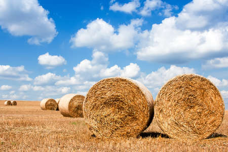 Straw sheaves on the field on the background of the cloudy sky in bright day photo