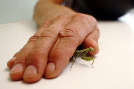 Mantis insect under the adult man hand