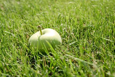 Green fresh apple in a green grass