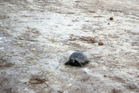 Tourtle in wild nature on sand at summer
