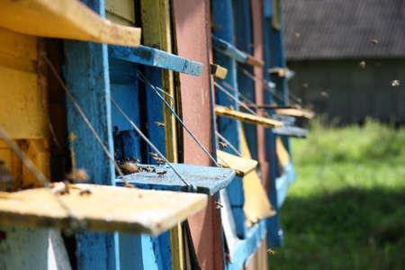 Bees flies into bee hive at summe rseason Reklamní fotografie - 122352161