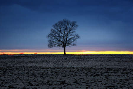 Lonely tree silhouette at sunset light at winter season