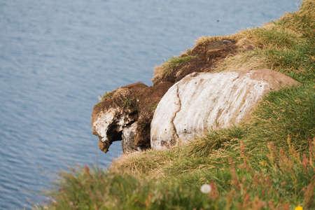 Rock shaped as a bird in Iceland Reklamní fotografie