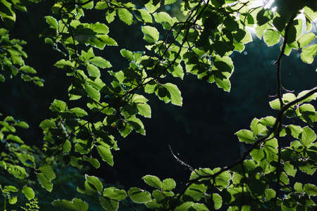 Green leaves background big contrast at summer season Reklamní fotografie