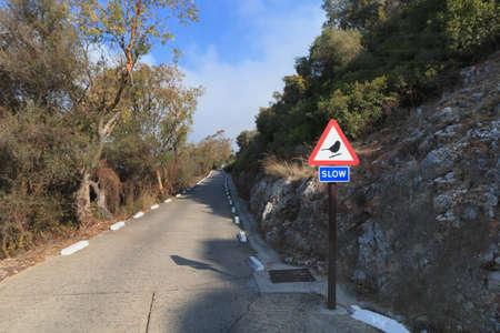 Road uphill to Gibraltar The Rock in front sign slow for birds Reklamní fotografie