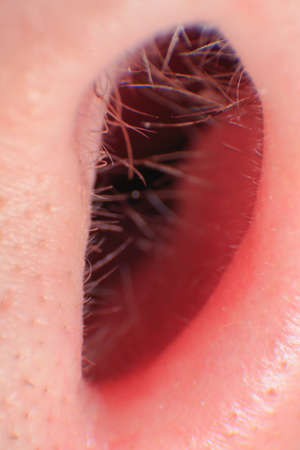 Growing hairs in a nose canal of caucasian adult male nose super macro close up angle Reklamní fotografie