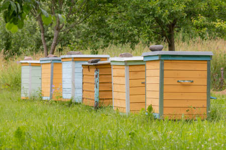 Honey bee hives in summer. Lithuania, Europe. 版權商用圖片