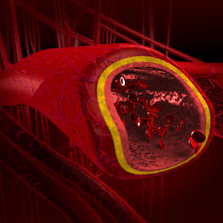 capillaries: Blood arteries and veins cut section