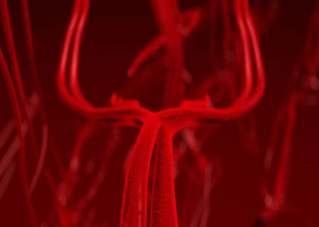 flesh surgery: Blood arteries and veins Stock Photo