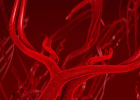 erythrocyte: Sangue arterie e le vene