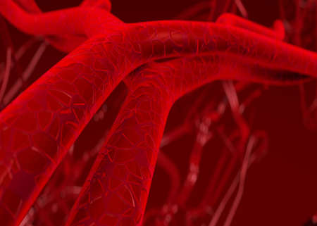 Blood arteries and veins Stock Photo - 823794