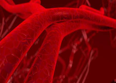 Sangre arterias y venas  Foto de archivo - 823794
