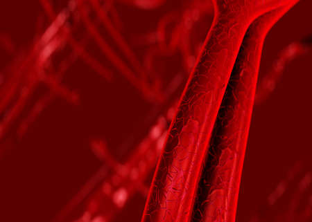 Blood arteries and veins photo