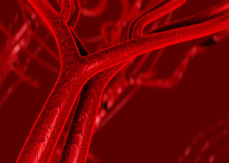 capillaries: Blood arteries and veins Stock Photo