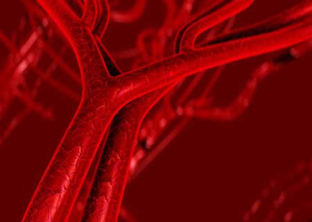 capillary: Blood arteries and veins Stock Photo