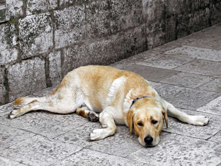 careless: Cute dog lying down on the ground and  looking sad.