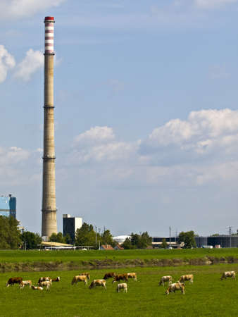 Heating and power plant near river against blue sky and green plants. Lot of cows in front. photo