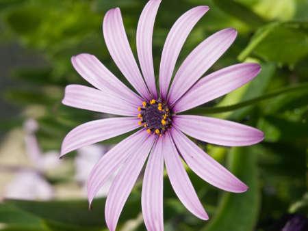 Small garden flower. Close up shot. photo